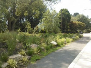 Grant Avenue Bioretention