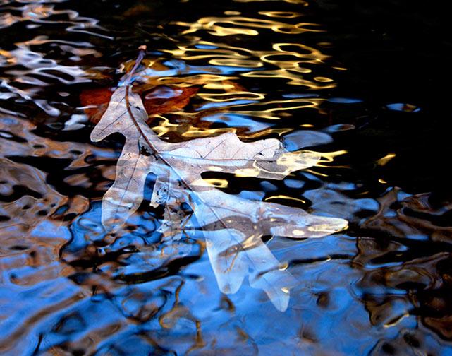 A photo of a leaf in Sligo Creek by Julius Kassovic